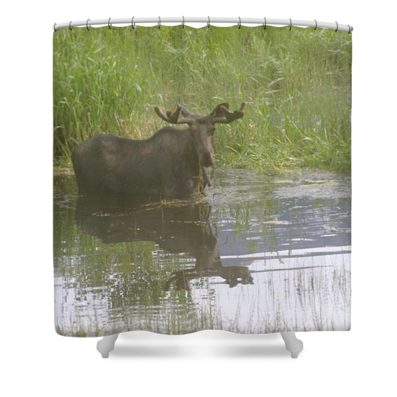 Mammels Shower Curtain featuring the photograph Bull Moose by Jeff Swan