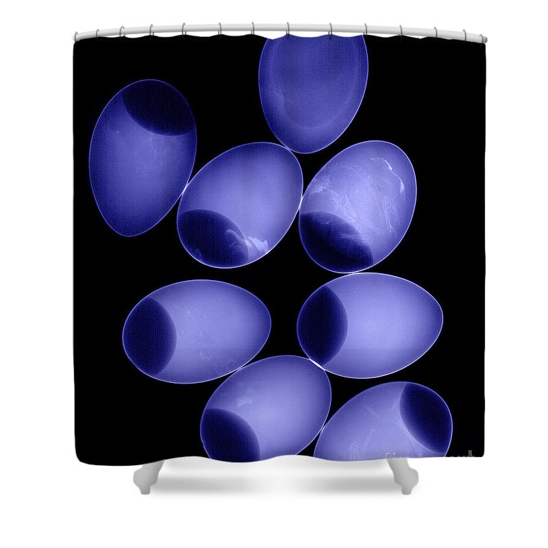 X-ray Shower Curtain featuring the photograph Chicken Eggs by Ted Kinsman