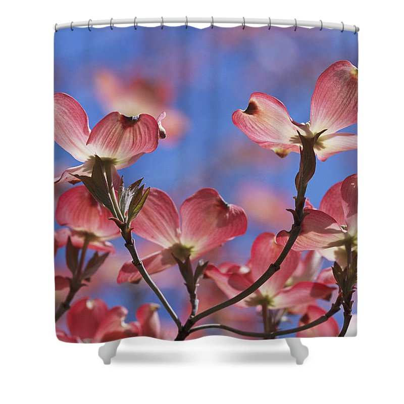 Plants Shower Curtain featuring the photograph Close View Of Pink Dogwood Blossoms by Darlyne A. Murawski