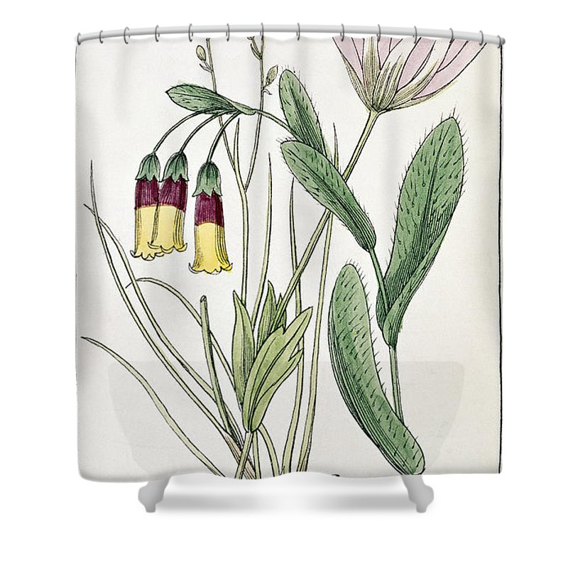 1855 Shower Curtain featuring the photograph Colosseum: Flower by Granger