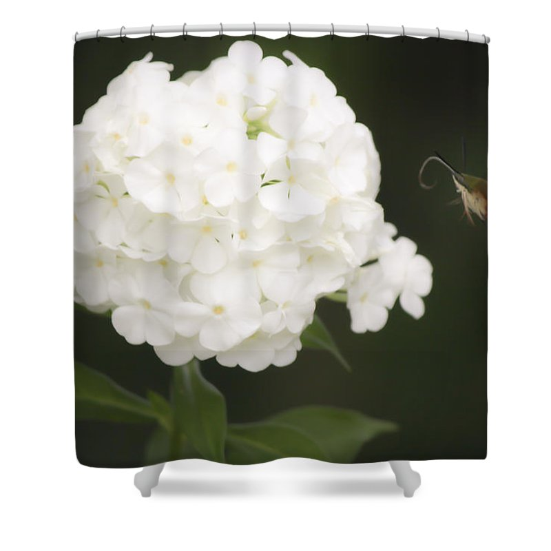 Sphingidae Shower Curtain featuring the photograph Coming In For A Landing by Teresa Mucha