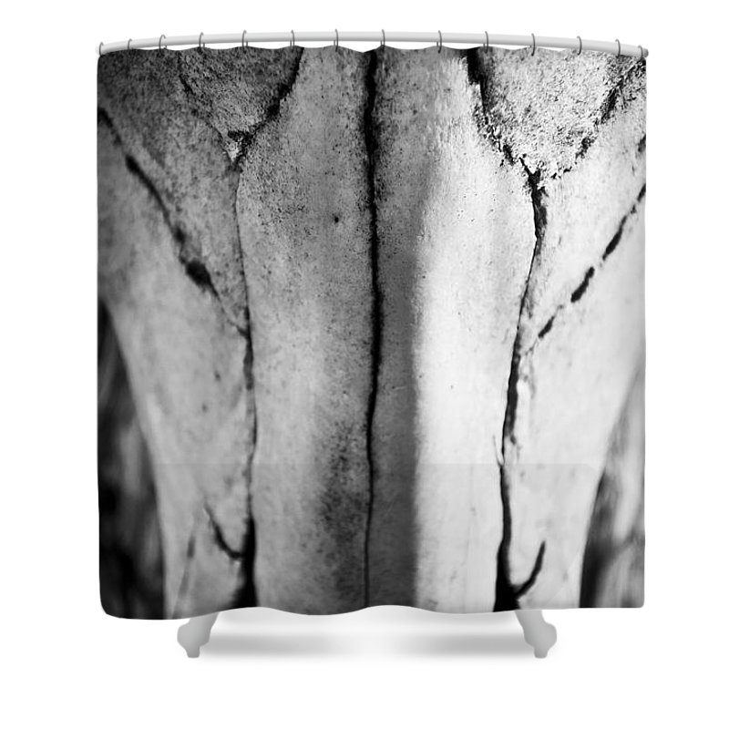 Black Shower Curtain featuring the photograph Cow Skull by Kacy Taylor