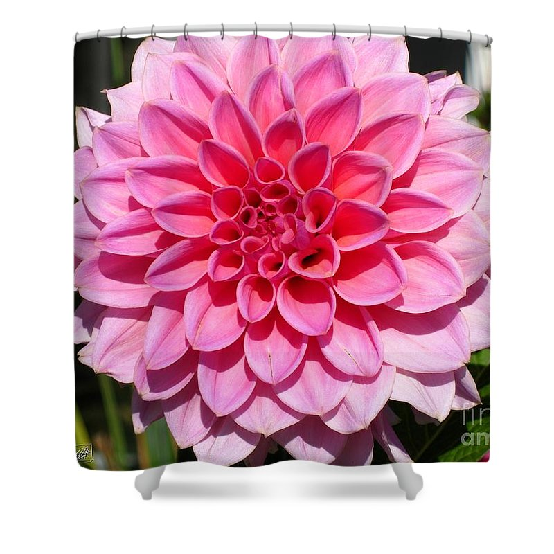 Dahlia Shower Curtain featuring the photograph Dahlia Named Lucky Number by J McCombie