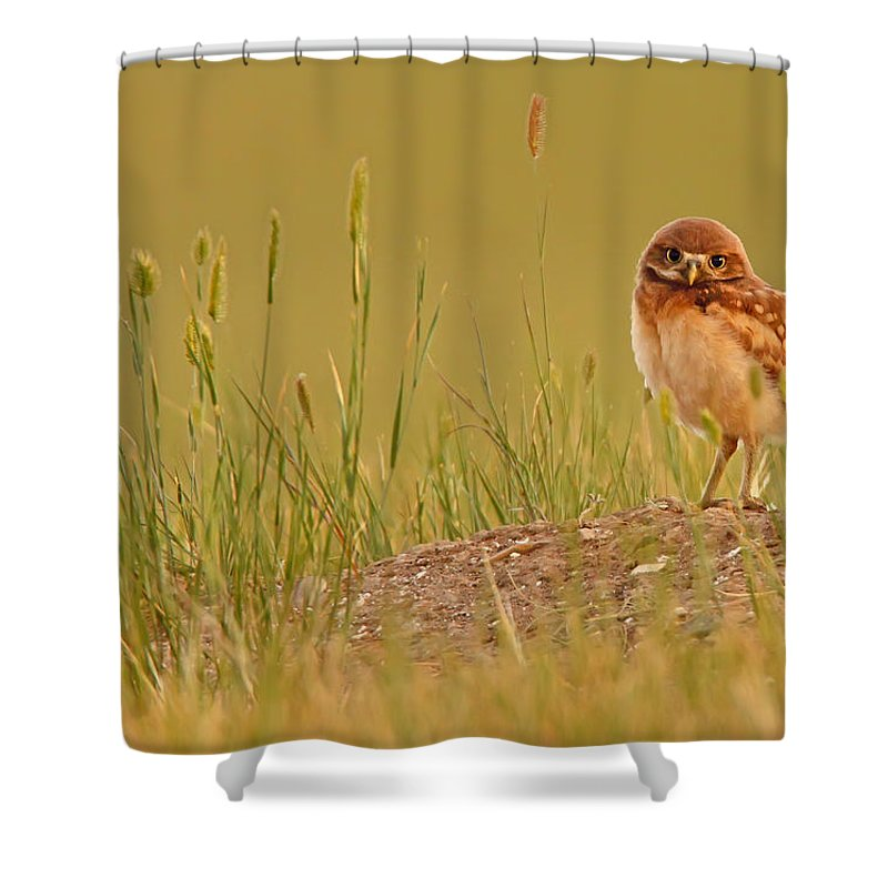 Light Shower Curtain featuring the photograph Digitally Enhanced Image With Painterly by Robert Postma