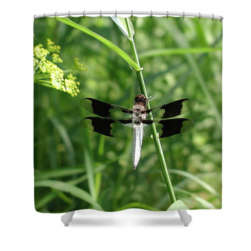 Dragonfly Shower Curtain featuring the photograph Dragonfly by Anna Ruzsan