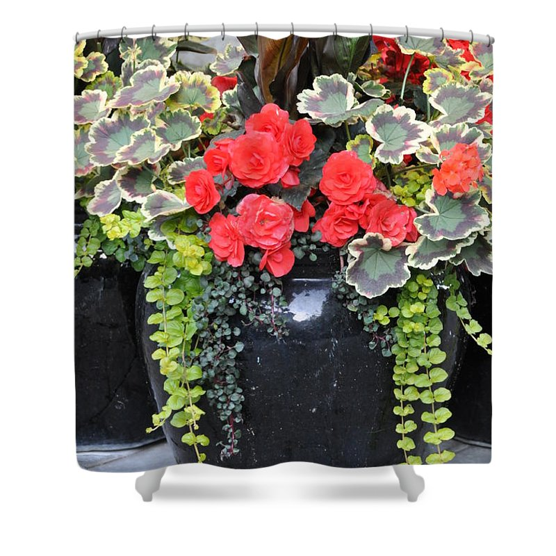 Flower Pots Shower Curtain featuring the photograph Flower Pots ........ 12 by Allen Beatty
