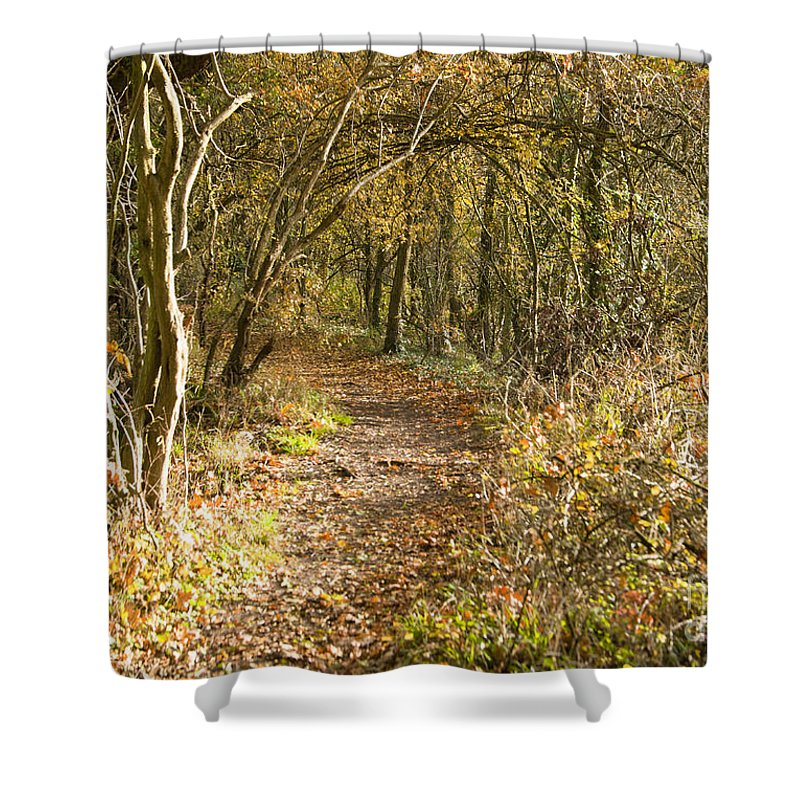 Britain Shower Curtain featuring the photograph Forest Path by Andrew Michael