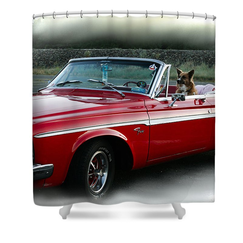 Fury Shower Curtain featuring the photograph Furry Fury by Sally Bauer