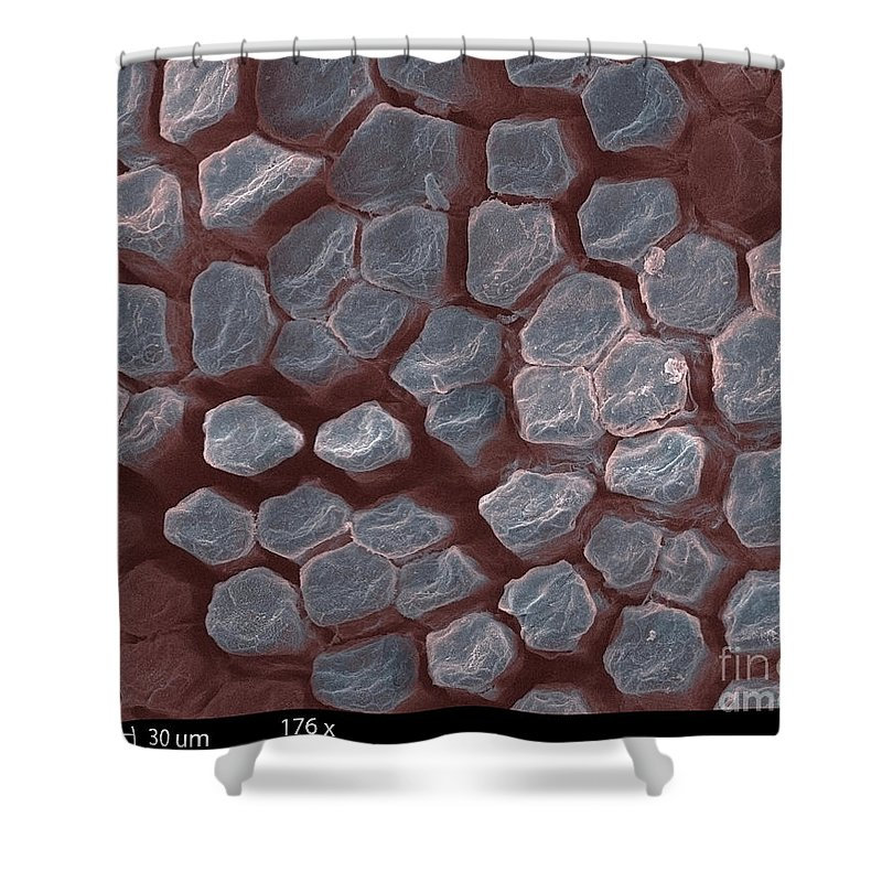 Tongue Shower Curtain featuring the photograph Gecko Tongue, Sem by Ted Kinsman