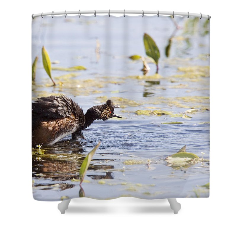 Grebe Shower Curtain featuring the photograph Grebe With Babies by Mark Duffy