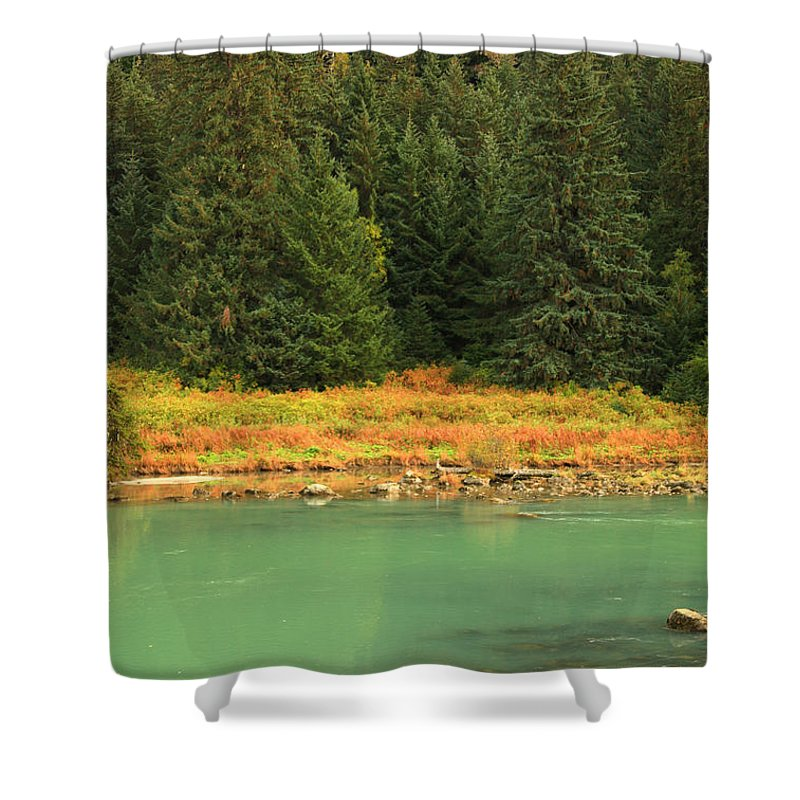 Light Shower Curtain featuring the photograph Grizzly Bear Fishing In Chilkoot River by Robert Postma