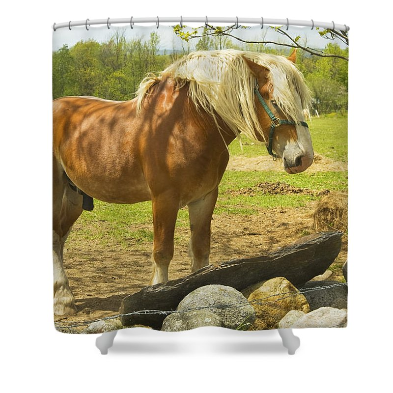Horse Shower Curtain featuring the photograph Horse Near Strone Wall In Field Spring Maine by Keith Webber Jr