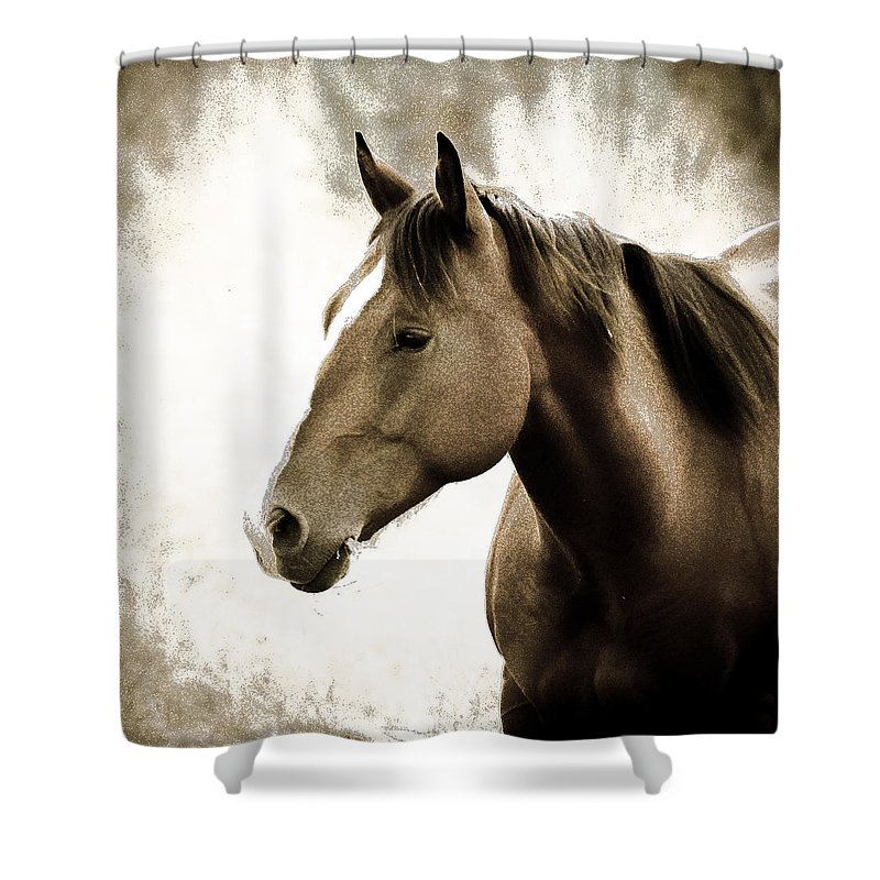 Horses Shower Curtain featuring the photograph Horse by Steve McKinzie