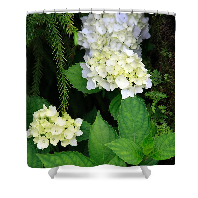 Hydrangea Shower Curtain featuring the photograph Hydrangea Blooming by Gaspar Avila