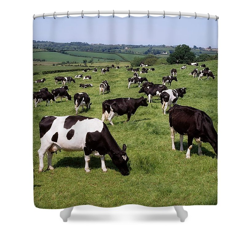 Field Shower Curtain featuring the photograph Ireland Friesian Cattle by The Irish Image Collection