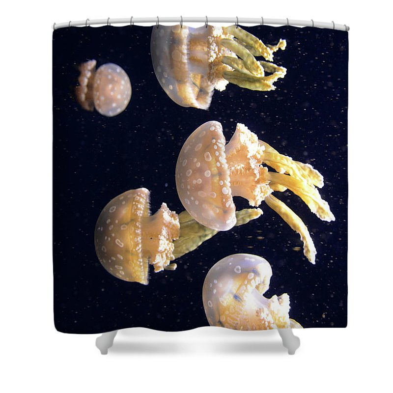 Jellyfish Shower Curtain featuring the photograph Jellyfish 3 by Bob Christopher