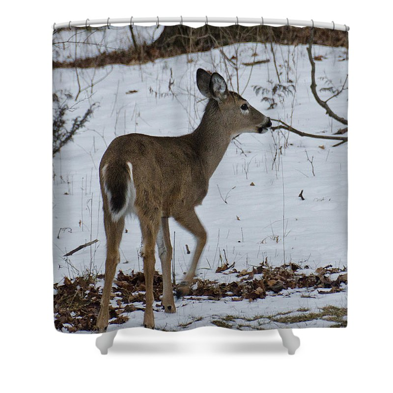 Usa Shower Curtain featuring the photograph Little White Tail On The Move by LeeAnn McLaneGoetz McLaneGoetzStudioLLCcom