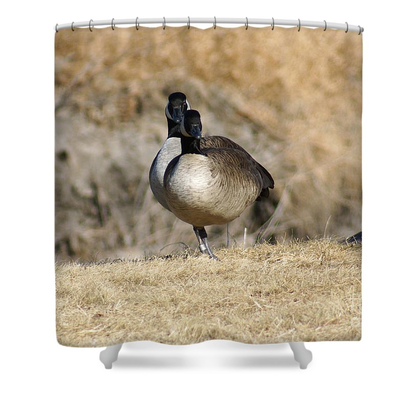 Goose Shower Curtain featuring the photograph Look One Leg by Lori Tordsen