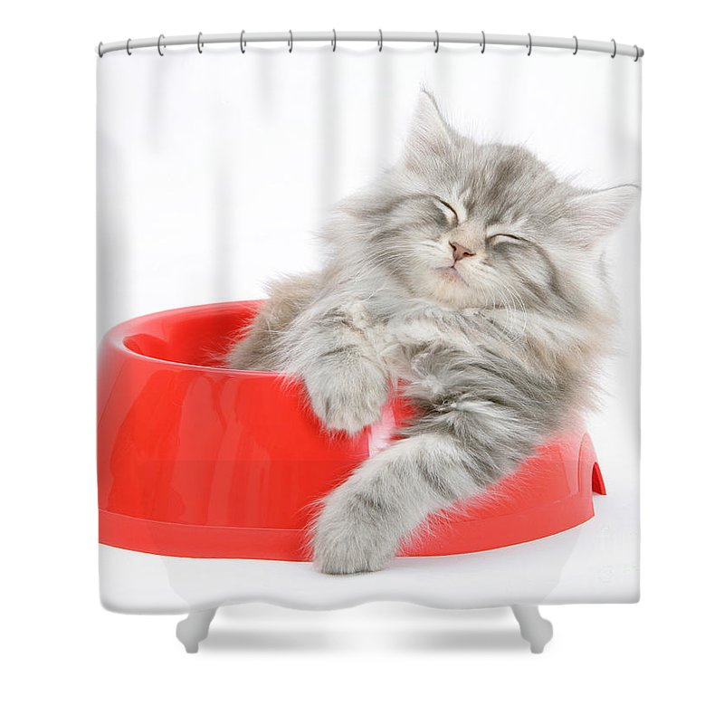 Animal Shower Curtain featuring the photograph Maine Coon Kitten by Mark Taylor