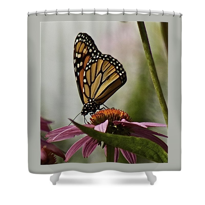 Monarch Butterfly Shower Curtain featuring the photograph Monarch Butterfly by Suanne Forster