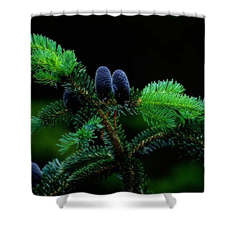 Pine Cones Shower Curtain featuring the photograph Mountain Life by Sharon Elliott