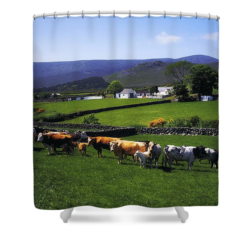 Animals Shower Curtain featuring the photograph Mourne Mountains, Co Down, Ireland by The Irish Image Collection