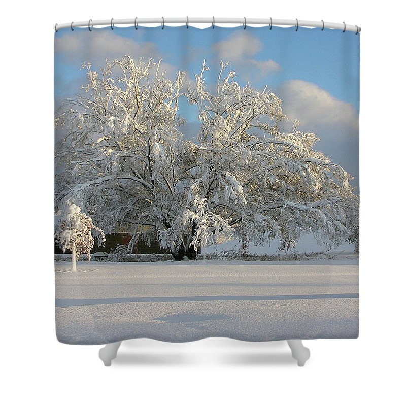 Tree Shower Curtain featuring the photograph October Surprise 1872 by Guy Whiteley