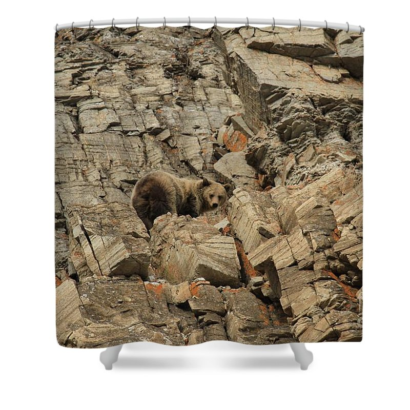 Grizzly Bear Shower Curtain featuring the photograph On The Edge Of Glory by Adam Jewell