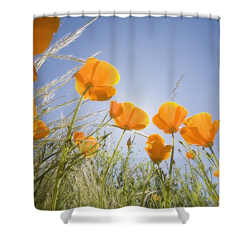 Craig Shower Curtain featuring the photograph Orange Poppies by Craig Tuttle