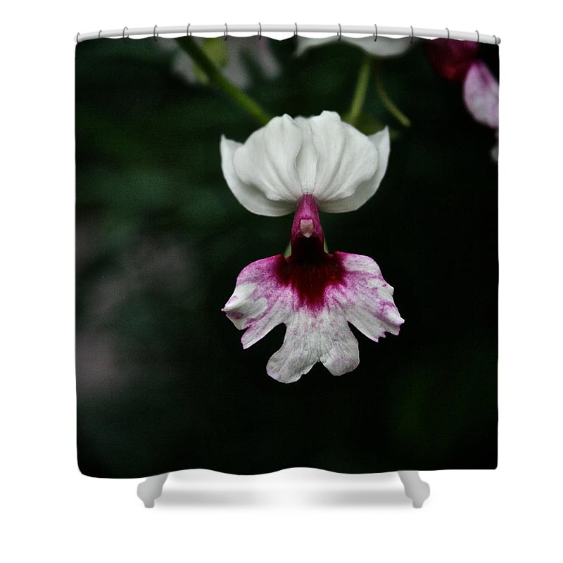 Tropical Plant Shower Curtain featuring the photograph Orchid by Susan Herber