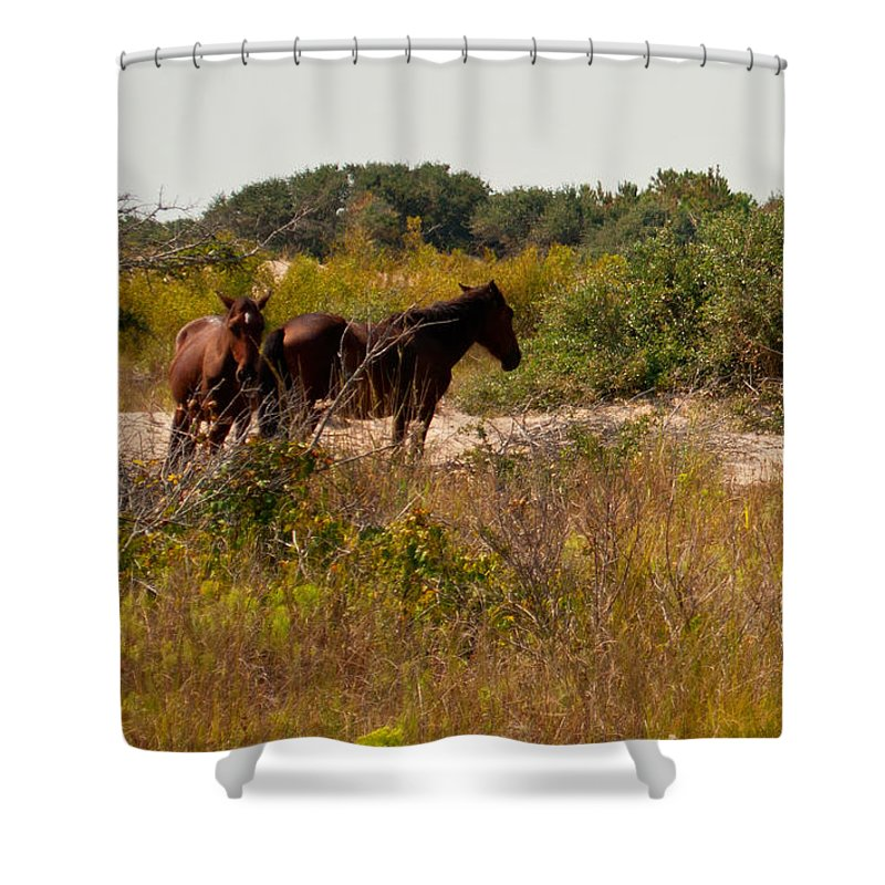 Nature Shower Curtain featuring the photograph Outer Banks Horses by Paulette B Wright