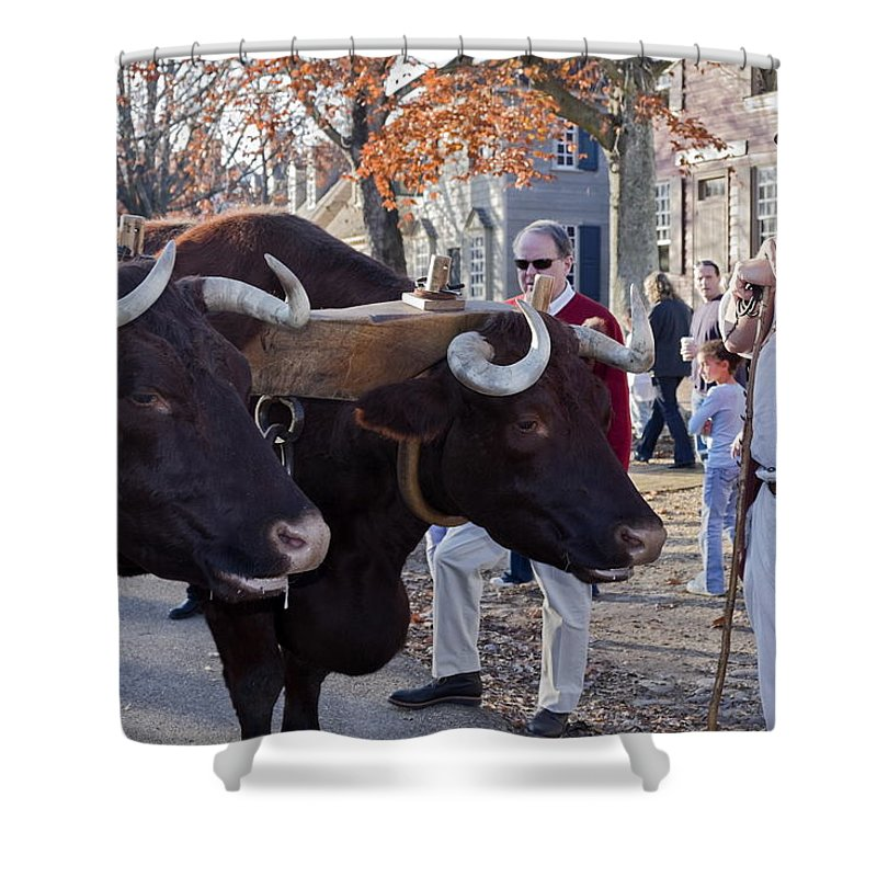Oxen Shower Curtain featuring the photograph Oxen And Handler by Sally Weigand