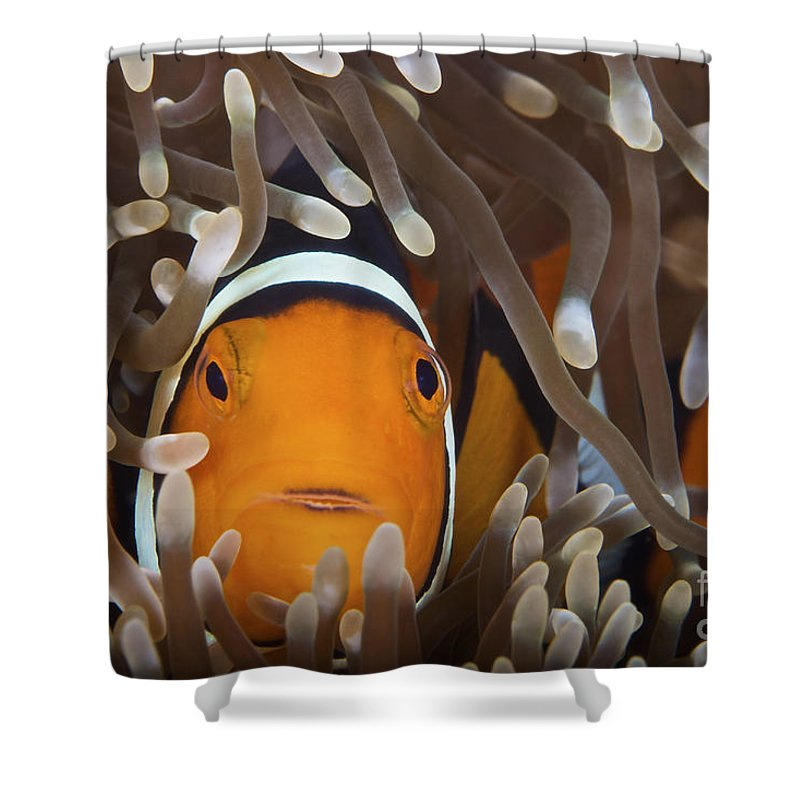 Amphiprion Percula Shower Curtain featuring the photograph Percula Clownfish In Its Host Anemone by Terry Moore
