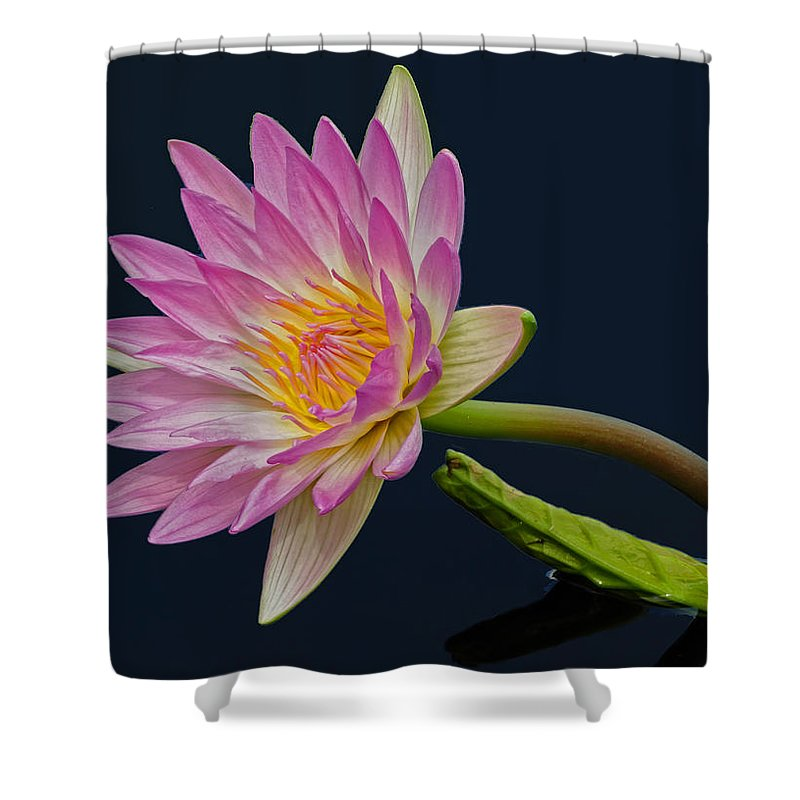 Pink Shower Curtain featuring the photograph Pink And Yellow Peony by Dave Mills