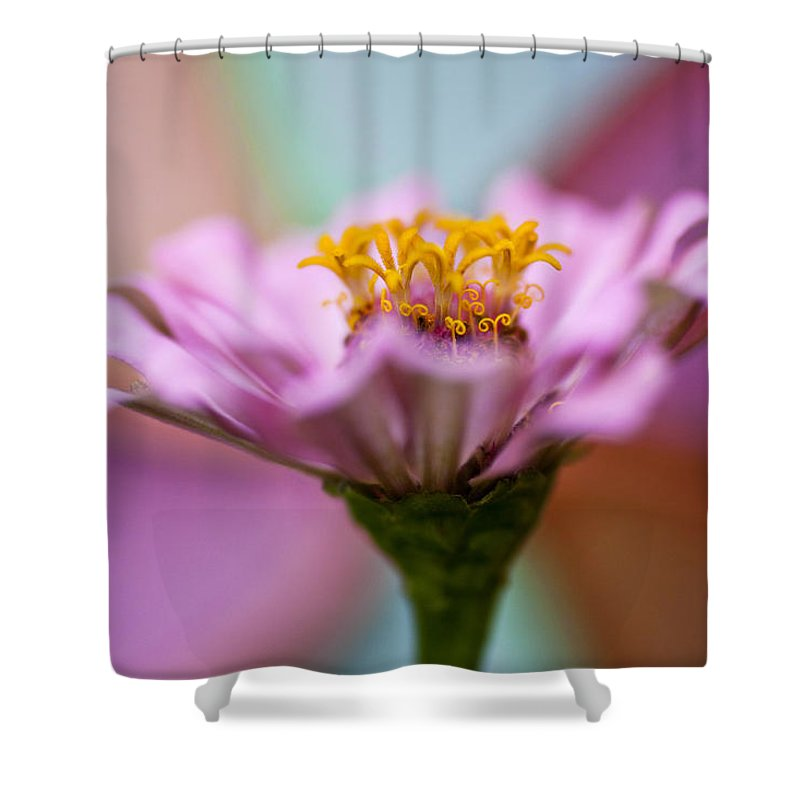 Flower Shower Curtain featuring the photograph Pink Zinnia by Amy Jackson