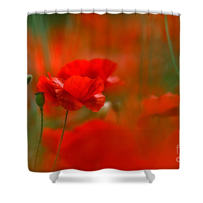 Poppy Shower Curtain featuring the photograph Poppy Flowers 02 by Nailia Schwarz