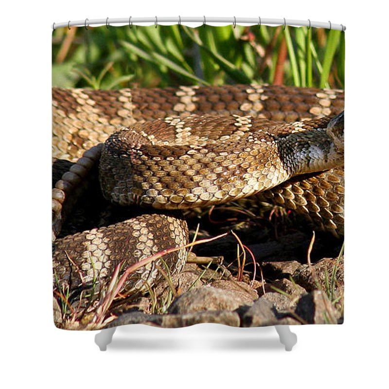Animals Shower Curtain featuring the photograph Rattlesnake by Jean Noren