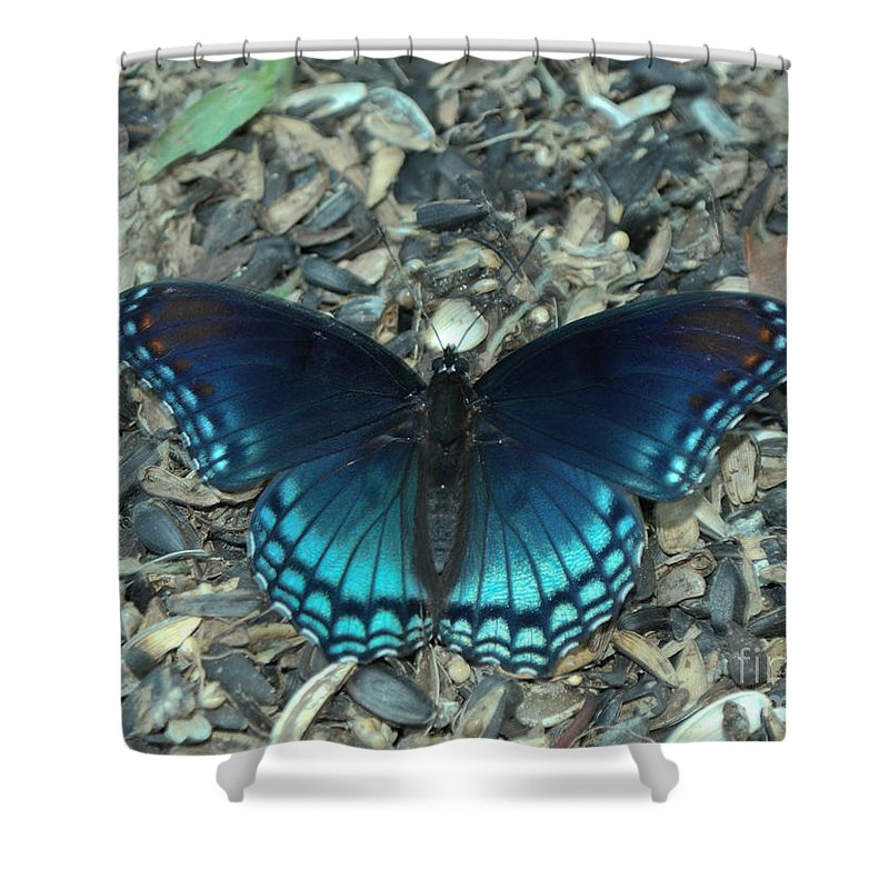 Red Spotted Purple Swallowtail Butterfly Shower Curtain for Sale by ...