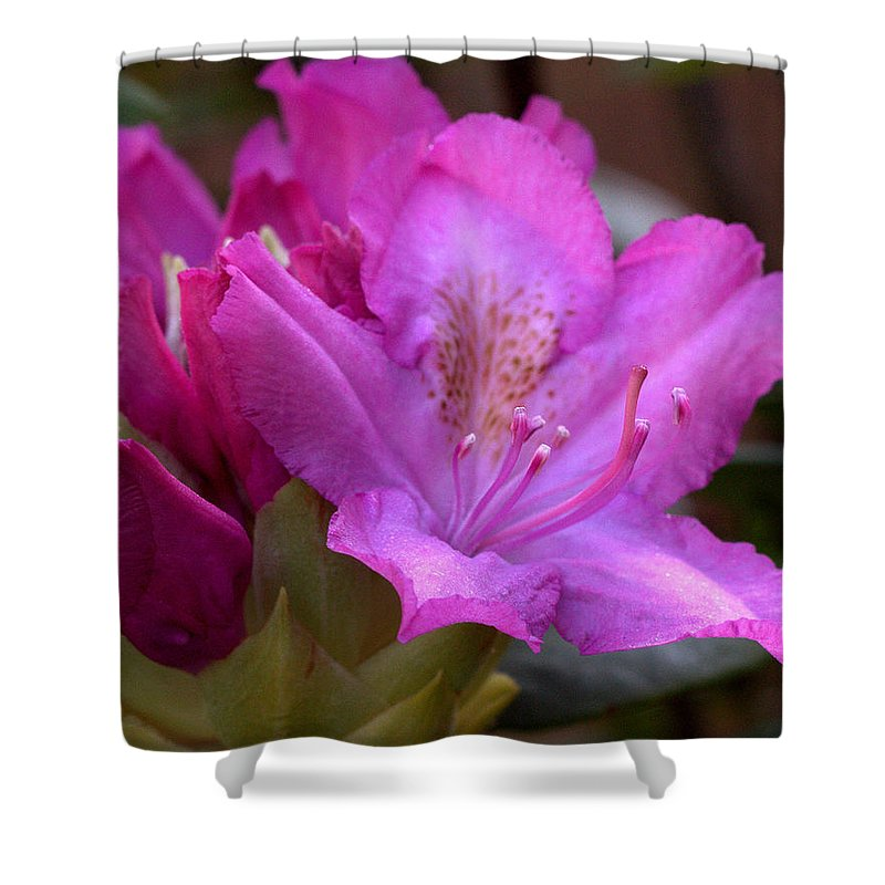 Rhodendron Shower Curtain featuring the photograph Rhododendron Bloom by Mel Hensley