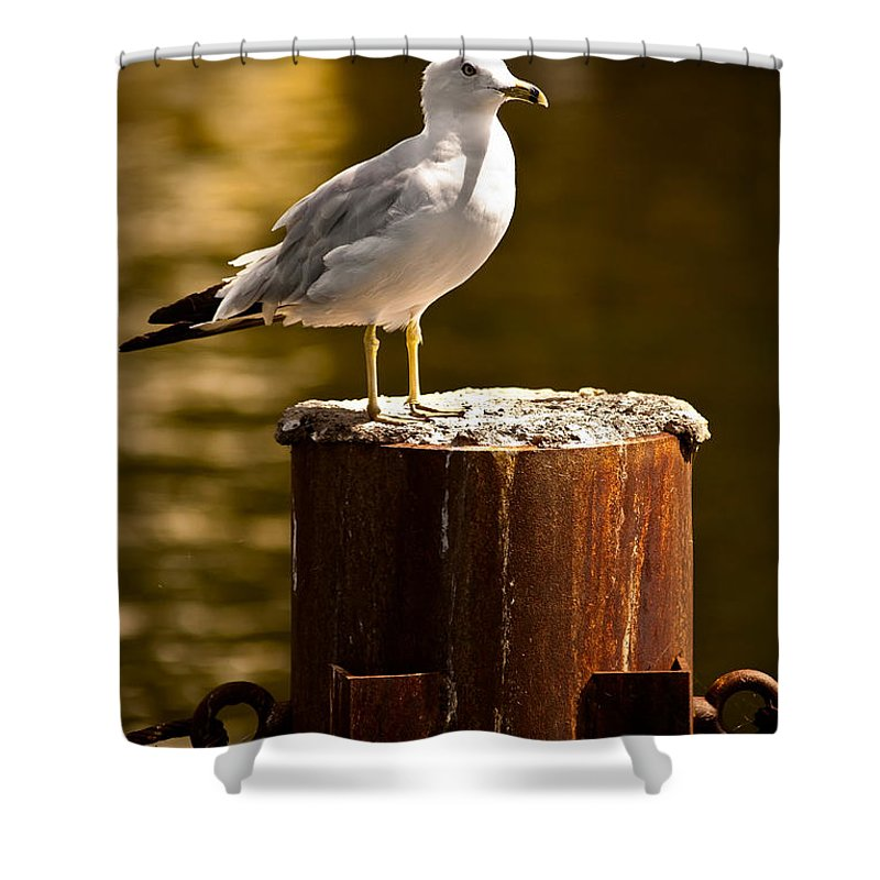 Ring-billed Gull Shower Curtain featuring the photograph Ring-billed Gull On Pillar by Onyonet Photo Studios
