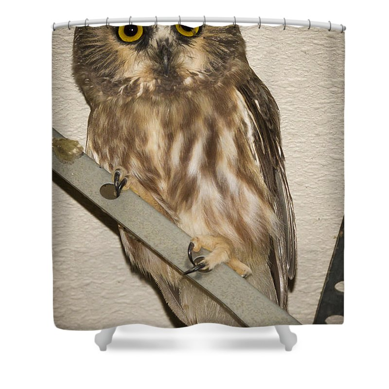 Owl Shower Curtain featuring the photograph Saw-whet by Jean Noren
