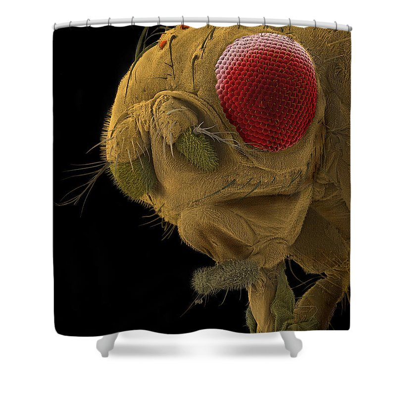 Fruit Fly Shower Curtain featuring the photograph Sem Of A Mutant Fruit Fly by Ted Kinsman