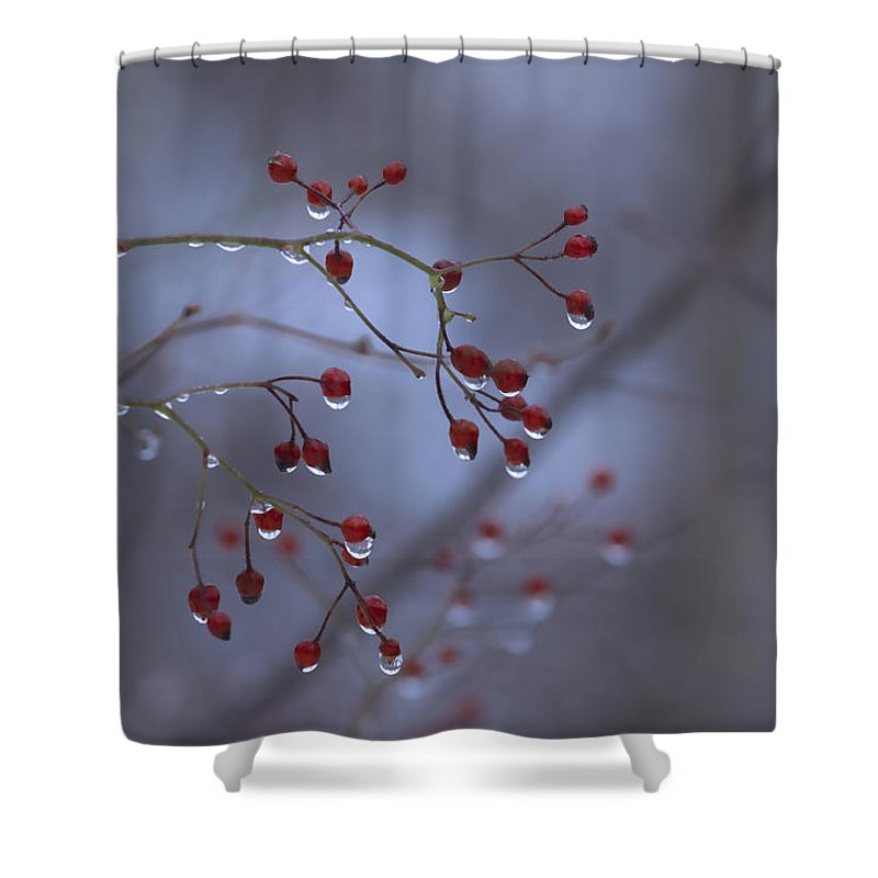 Nature Shower Curtain featuring the photograph Silent Morning by Ron Jones
