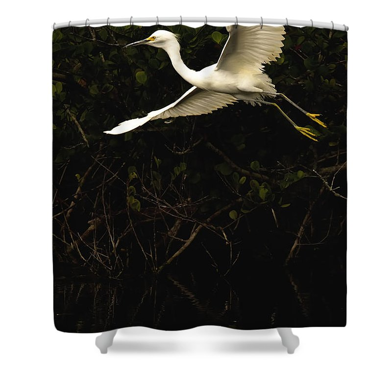 Light Shower Curtain featuring the photograph Snowy Egret, Florida by Robert Postma