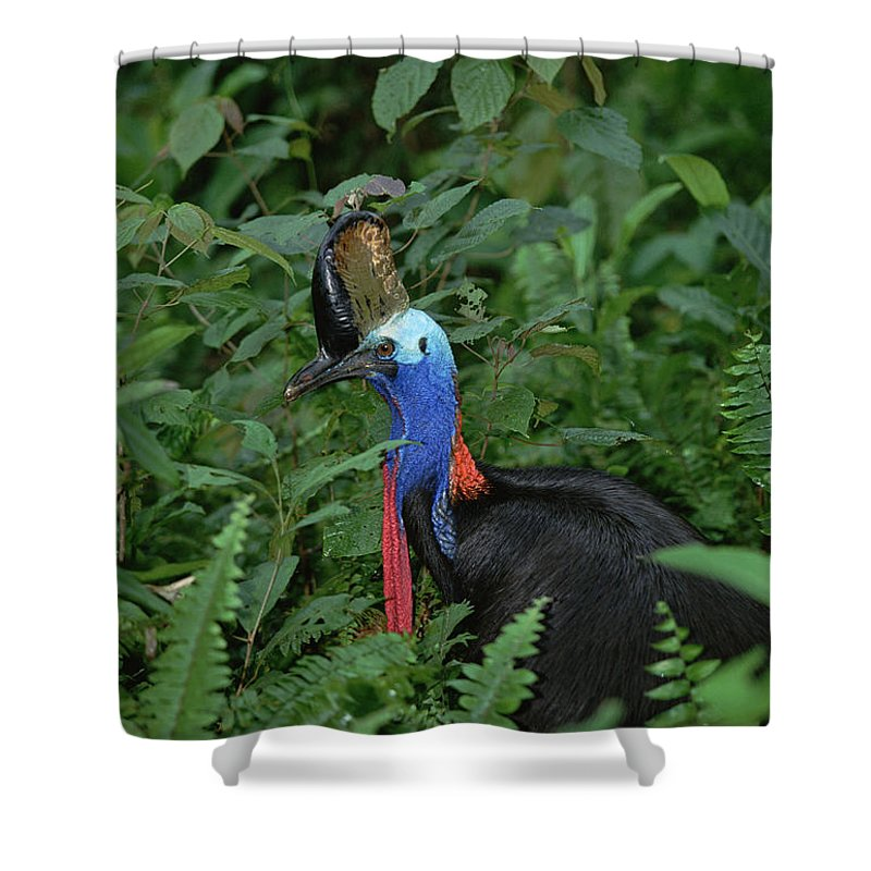 Mp Shower Curtain featuring the photograph Southern Cassowary Casuarius Casuarius by Konrad Wothe