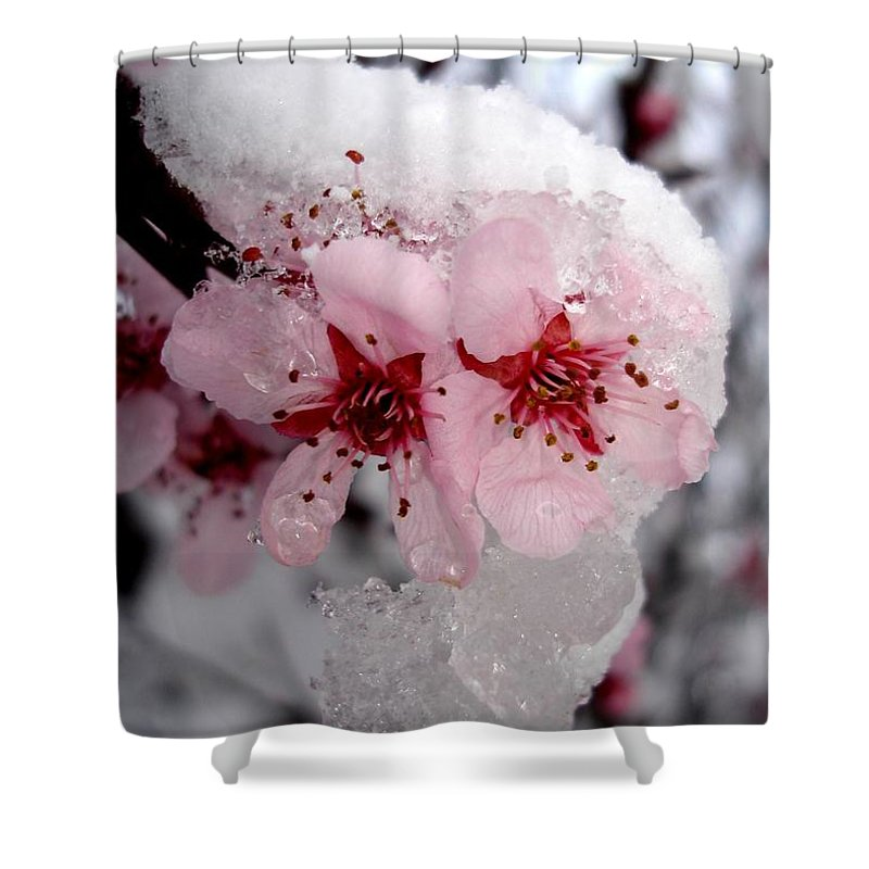 Spring Shower Curtain featuring the photograph Spring Blossom Icicle by Kerri Mortenson