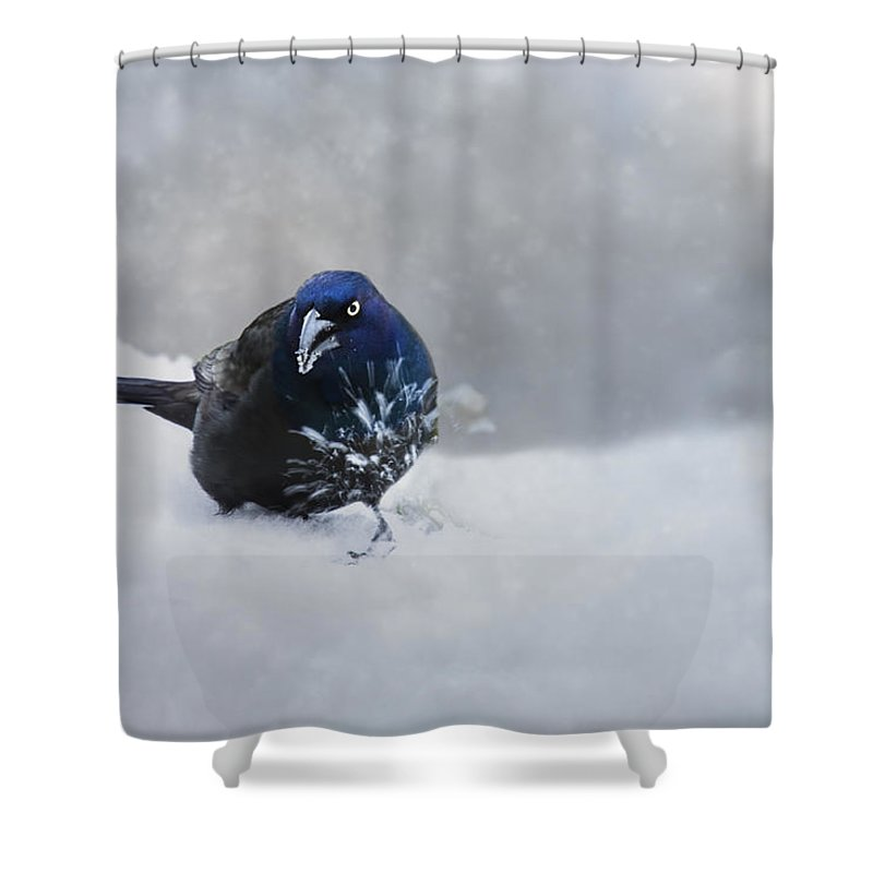 Winter Shower Curtain featuring the photograph The Reluctant Model by Ron Jones