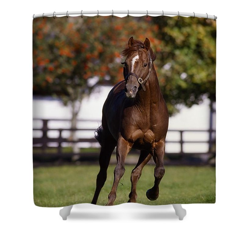 Bridle Shower Curtain featuring the photograph Thoroughbred Horse, Ireland by The Irish Image Collection
