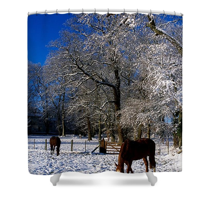 Agriculture Shower Curtain featuring the photograph Thoroughbred Horses, Mares In Snow by The Irish Image Collection