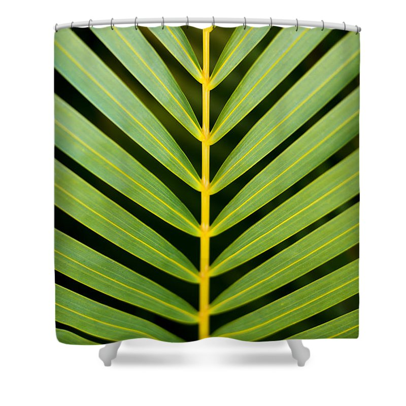 Beautiful Shower Curtain featuring the photograph Tropical Palm Frond by MakenaStockMedia - Printscapes